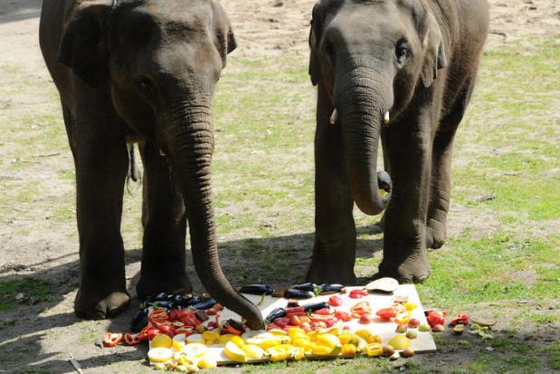 Elefanten_6_ha_bil_1181515b